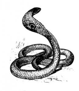 Snake Oil by Gadget man Logo